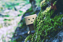 Danbo (15) @danbo/данбо2 (Robert Krstevski) Tags: danbo danboard danbostory danbomacedonia danboamazon danborou 365danbo photography photooftheday photograph popular photo photographer nature natural naturelovers naturalworld flora floral krivapalanka macedonia balkan europe colors filters nikond3300 nikon revoltech robot robertkrstevskiblogspotcom robertkrstevski tree trees данбо природа