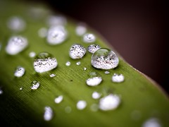 Water drop (Explore) (Esat Sanlav) Tags: drop water life world nature explore olympus olympuspen olympuspenep5 penep5 ep5 olympusep5 vivitar macrolens 55mmf28 11 outdoor green white black close closeup m43