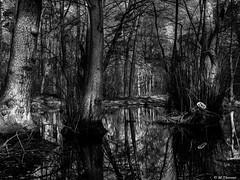 Dark Forest (Codex IV) Tags: baum baumstamm kleinegewässer land landscape landschaft nikond5300 tamron240700 teich tree vegetation wald wasser water sonnig sunny