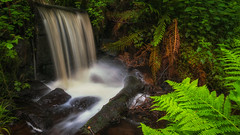 Secret fall (Lee~Harris) Tags: water waterfall foliage colourful flow motion outdoors longexposure nature green orange nikon tranquil beauty uk england forest stream river creek d300 contrast lens landscape magical pretty