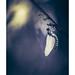 New life (Naska Photographie) Tags: naska photographie photophotographe paysage proxy proxyphoto printemps macro macrophotographie macrophoto extérieur insectes sauvage dragonfly dragonflie odanate libellule nature color couleur bokeh flare art artistique minimaliste minimalisme