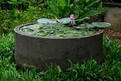 DSC01578 (explorewithez) Tags: nature birds butterflies flowers floraandfauna