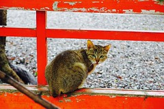 Today's Cat@2017-06-29 (masatsu) Tags: cat thebiggestgroupwithonlycats catspotting pentax mx1
