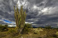 Bosque tropical seco, Desierto de la Tatacoa (Gabri ®) Tags: desierto colombiabosque cactus colores explorar explore sombras caminos huila neiva espinas
