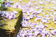 DSC_4546 (Frankie Tseng (法蘭基)) Tags: yms taipei taiwan flower flowers nikon cherryblossoms summer spring 2017 abstract blur bw bwphotography blackwhite yangmingshan 台北 櫻花 陽明山 台灣 抽象