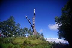 DSC07854 (rc90459) Tags: 最後的夫妻樹 夫妻樹 塔塔加 玉山