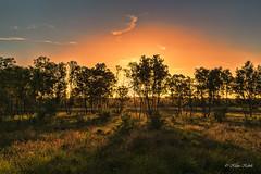 Licht und Schatten - 26061702 (Klaus Kehrls) Tags: landschaft natur moor wittmoor sonnenuntergang lichtundschatten