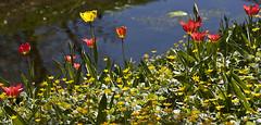 Llum... (svet.llum) Tags: luz llum flor flores paisaje primavera agua reflejos moscú rusia parque