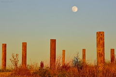 Moonrise|Byxbee Park, Palo Alto, California (miltonsun) Tags: moonrise byxbeepark paloalto california dusk seascape bay ngc bayarea shore seaside coast landscape outdoor mountains rollinghills evening sunrise sunset summer moonset moonlight wildflowers