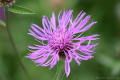 Purple Flower (Bri_J) Tags: tropicalbutterflyhouse northanston sheffield southyorkshire uk yorkshire nikon d7200 purple flower macro