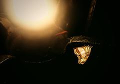Escape the Light