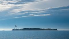 20170524_072429.jpg (jussidimitrijeff) Tags: bird helsinki vuosaari sea