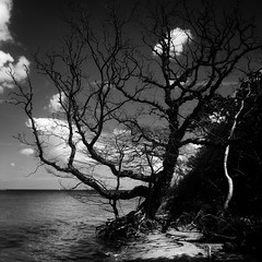 (thomaslindholm) Tags: hotmono naturelovers naturelover blackwhite whiteonblack outdoor friluftsliv nature natur sortoghvid blackandwhite bnw bw creativ fyn danmark denmark dk iphoneart photoshoot onlyiphone iphoneonly iphone6 iphone trees tree beach water thomaslindholm