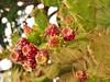 07.06.2017 - Batz, jardin Georges-Delaselle (52) (maryvalem) Tags: france bretagne finistère îledebatz alem lemétayer alainlemétayer