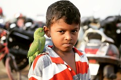 Boy at Marina Beach (gokulkrish3) Tags: marinabeach boy parrot evening chennai