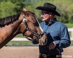 JBC_8164.jpg (Jim Babbage) Tags: krahc annualshow appaloosa horses