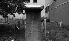 (triebensee) Tags: nikon f2 photomic ilforddelta400 kodakd76 epsonv700 nikkor 50mm f14 selfdeveloped blackandwhite film