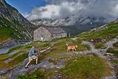 HaPPy hour at the Great Saint Bernard Pass and its Morgue . The wind is blowing on the Grand Combin and  Mont Vélan. No 2322. (Izakigur) Tags: coldugrandsaintbernard coldumontjoux grosserstbernhard lepetitprince viafrancigena colledelgransanbernardo montmort gransanbernardo grossersanktbernard greatstbernardpass myswitzerland musictomyeyes d700 nikond700 nikkor nikkor2470f28 dog chien swiss suiza suisia suizo suïssa summer swissromande suisseromande romandie suíça flickr switzerland schwyz nikon helvetia feel lasuisse liberty izakigur europe europa dieschweiz ch suisse schweiz svizzera سويسرا laventuresuisse thelittleprince ilpiccoloprincipe