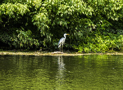 heron in the middle (PDKImages) Tags: bergerac france reflections water gironde heron bridge river dordogne waterfront