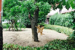 Today's Cat@2017-06-10 (masatsu) Tags: cat thebiggestgroupwithonlycats catspotting cameraphone apple softbank iphone