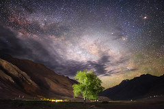 Lonely (nimitnigam) Tags: international images for science exhibition 2017 the royal photographic society great britain india indian astro astrolandscape astrophotographer astrophoto astrophotography astrophotograph astrophotographs new delhi spiti kaza lonely tree nature naturescape natures landscape landscapes nimit nigam mountain mountains himachal himachalpradesh himalaya himalayan himalayascape himalayas wallpaper wallpapers background backgrounds valley valleys स्पितीवैली nimitnigam