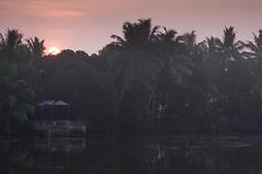 Backwaters, Cochin (Wanda Amos@Old Bar) Tags: india cochin backwaters palmtrees sunrise wharf shadows daybreak water river