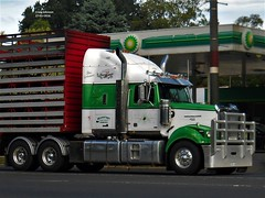 photo by secret squirrel (secret squirrel6) Tags: vehicle burp secretsquirrel6truckphotos craigjohnsontruckphotos austrliantruck bigrig worldtruck truckphoto photo westernstartruck livestock transport bramstedtlivestock