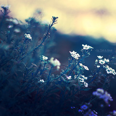 Peaceful Evening (João Pedro de Almeida) Tags: peace evening flower white floral sun spring garden summer forest light backlight sunny day dream beauty world micro macro dof focus blur bokeh outdoor nature colors magic soft fantasy fairy abstract seasons plant details canon600d 50mmf18