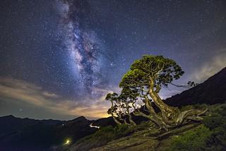 合歡山北峰~玉山圓柏銀河~ Single-seed Juniper Milkyway