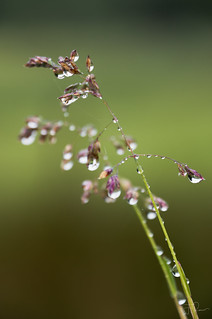 After the rain (HMM)