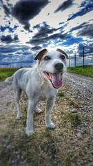 Anton (Oliver Kuehne) Tags: weather lgg5 bavaria germany penzing landsberg android cellphone dog hund chien anton jrt jackrussellterrier