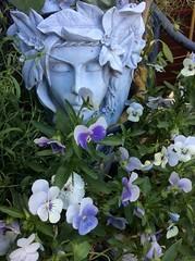 Garden colours (amanda.parker377) Tags: calm gardencolours gardening purple flowerpots elfin seedpod loveinthemist dianthus violas