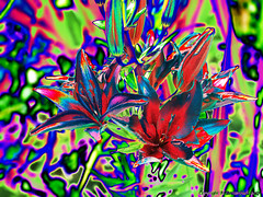 Slide 'em up!!! (fishmonger45) Tags: abstract artdigital photoshop flowers filters greatphotographers