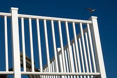 Blue Solent Heaven (fstop186) Tags: blue heaven summer balcony seagull sun heatwave solent