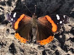 COCOON (@miimseal) Tags: metamorphose swarm chrysalis sapiens