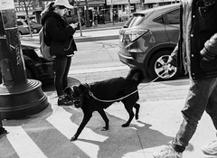 Staring Back (Yewbert The Omnipotent) Tags: toronto canada lightroom urban city downtown candid street bw blackwhite tamron nikon d750 smoking chinatown monochrome people pets animals