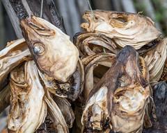 NB-311.jpg (neil.bulman) Tags: norway cruise scandanavia lefoten thomson landofthemidnightsun fish heads leknes thomsoncelebration nordland no