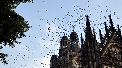Black Cathedral Birds (Eddy Allart) Tags: catedral kathedraal church pajaros vogels