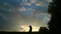 Summer Sunrise Silhouette (Jo. Jo.) Tags: sunrise dog sky clouds silhouette labrador summer morning