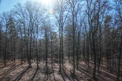 Long shadows (Kasimir) Tags: trees shadows kaiserslautern árbol sombras light forest bosque wald pfalz