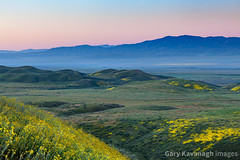 Looking across Carrizo Plain Toward Caliente Range At Sunrise (Gary Rides Bikes) Tags: calienterange california carrizoplain carrizoplainnationalmonument northamerica sanandreasfault sanluisobispocounty springtime usa beautyinnature blue colorgradient day goldcolored greencolor hill inbloom landscape morning nature nopeople pinkcolor plain remote rollinglandscape scenicsnature yellow