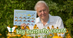 Big Butterfly Count Thunderclap (BC HQ) Tags: butterflyconservation bigbutterflycount butterflies butterfly sirdavidattenborough summer citizenscience survey thunderclap charity wildlife 2017 july august