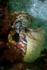 Hermit battle (Shure Media) Tags: rockport massachusetts old garden beach hermit crab green barnacle nudibranch rock