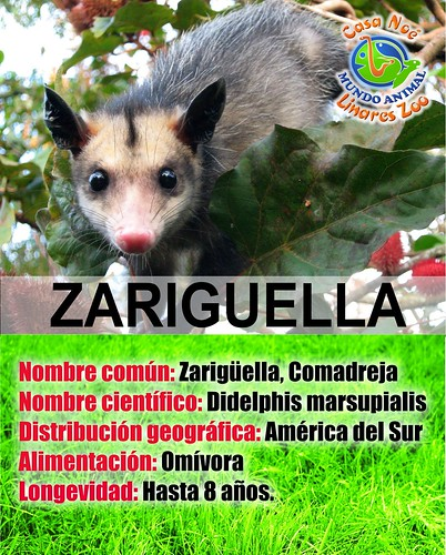 zariguella