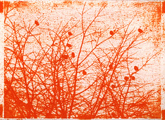 Finches (batuda) Tags: anthotype alternative print printing analog analogue plant plants pigment red yellow orange pepper sweetpepper bellpepper sunprint sun watercolor watercolour smiltainis smlt a4 20x30 color colour landscape tree trees branches sky spring bird birds finch siskin finches krantoal šančiai kaunas lithuania lietuva inkjet transparency fz5 bleaching
