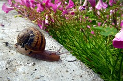 sfrattata (fotomie2009) Tags: chiocciola snail animal fauna lumaca fotomie2009 nora caracci
