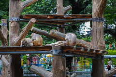 SDQH2570lr (yoshitoshi ABe) Tags: 20170514 吉祥寺 井の頭公園 sigma sigma85mmf14dghsmart016 sdquattroh サル