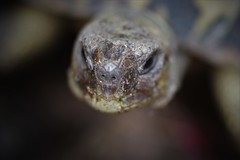 a strange encounter... (Angelo Petrozza) Tags: tartaruga testuggine rettile testudo tortoises tortoise macro focus pentaxk70 angelopetrozza zeiss planar t