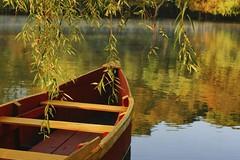 VERDE. (NIKONIANO) Tags: camécuaro lago lagodecamécuaro méxico paisaje naturaleza ahuehuete árbol árboles sabino sabinos michoacán enmichoacán tangancícuaro tangancícuaromichoacán mexicano federicogarcíalorca