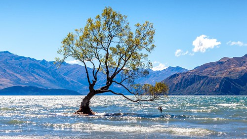 That Wanaka Tree-8